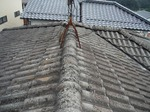 屋根 (2).jpg