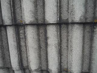 屋根大.jpg