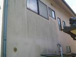 外壁カビ1.jpg