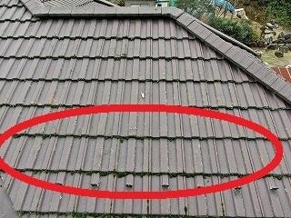 屋根苔大.jpg